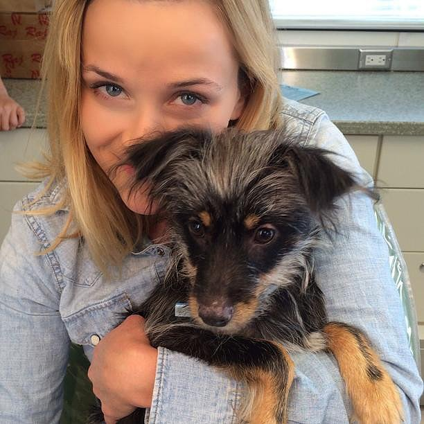 Reese Witherspoon thought about taking a stray dog home. Source: Instagram user reesewitherspoon