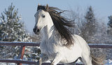 10 Most Popular Horse Breeds