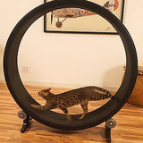 Is This the Prettiest Cat Wheel Ever?