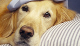 Dog Health: Common Symptoms of Illness