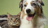 Common Cat and Dog Myths Debunked