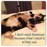 "We Chat With the Founder of Tumblr Hit ""Confused Cats Against Feminism"""