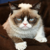 How Grumpy Cat Became a Feline Millionaire