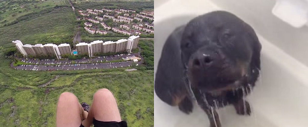 What's Trending: A Breathtaking Parachute Jump, Shower Dog, and More
