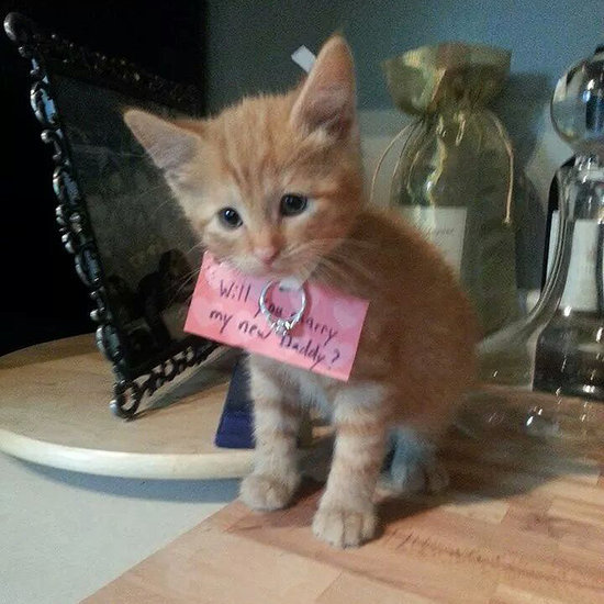 Kitten Proposal Pictures