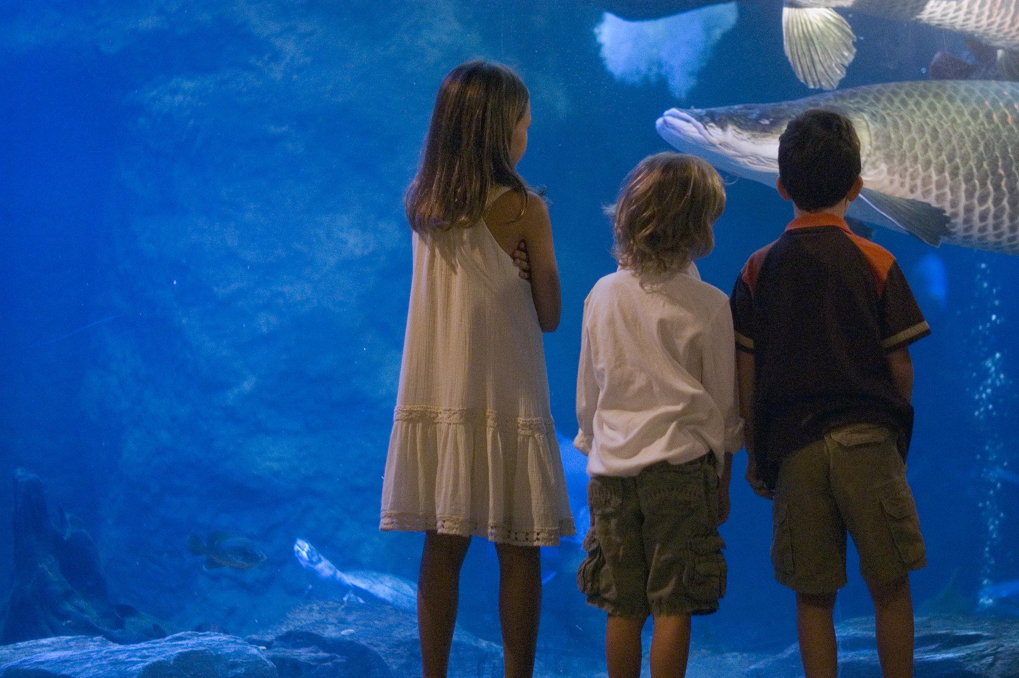 Inspire Curiosity at the Local Aquarium