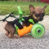 Dog in 3D-Printed Wheelchair
