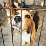 New Federal Regulation Is a Win Against Overseas Puppy Mills