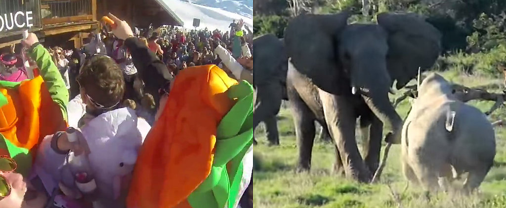What's Trending: One Smart Elephant, a Party-Ruining Carrot, and More!