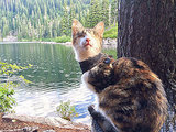 WATCH: Honey Bee the Blind Cat Is an Expert Hiker