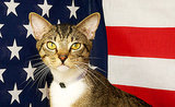 So Your Cat Wants to Be a U.S. Citizen...
