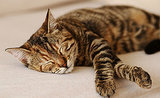 5 Funny Things My Cats Do When They're Falling Asleep