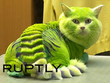 Brave Groomer Turns Cat Into a Green Dragon