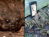 From Grumpy Frog to iPhone-Loving Croakers: See Why Frogs Are Having a Moment
