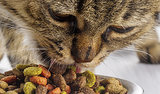 Cat Nutrition Myths Debunked