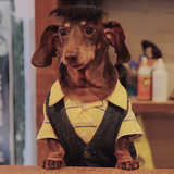 Dawson's Creek Parody With Dachshunds