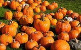 Celeb Families Hit the Pumpkin Patch