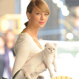 The Purr-fect Guide to Taylor Swift's Cat Obsession
