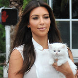 Celebrities With Pet Cats (Video)