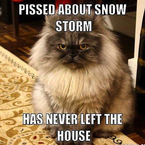 Blizzard Memes