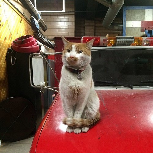 Firefighter Cats on Instagram