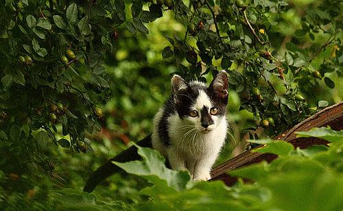 It's Feral Cat Day — Have You Ever Seen One?