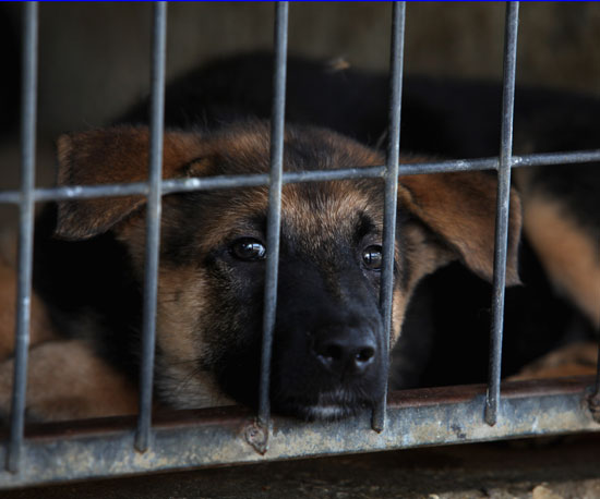 Myth: Dogs Are in Shelters Because They Were Not Good Pets.