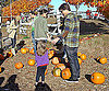 Photo Slide of Tom Cruise And Katie Holmes Picking Pumpkins With Suri