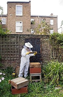 Would You Add a Beehive to Your Home?