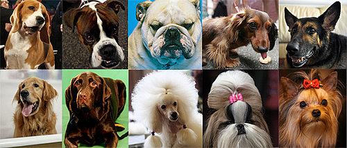 What's the Most Popular Dog Breed For 2009?