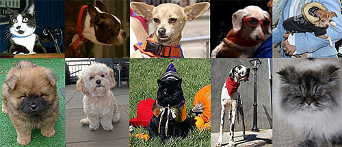 Most Missed Celebrity Pet or Celebripup of 2009?