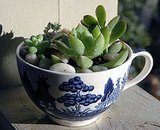 This Succulent Garden in a Vintage Blue and White Teacup ($17) is perfect for a desktop or windowsill.