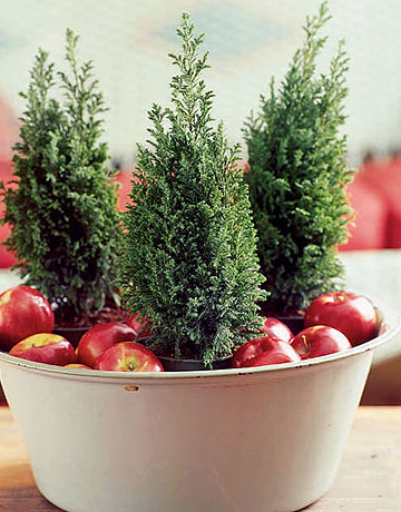Apples make a festive arrangement of mini evergreens look less traditional.  Source