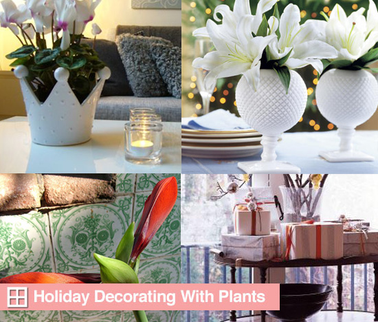 Holiday Decorating With Plants and Flowers