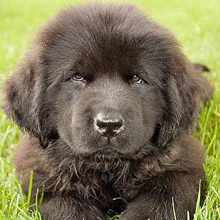 Puppy Breed Quiz 2011-03-21 16:00:00
