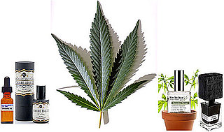 Cannabis Fragrances