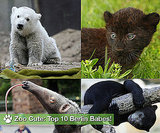 "Who Is ""Zoo Cute"" in Berlin?"