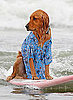 Photos of the 2009 Dog Surfing Competition in San Diego 2009-06-22 10:59:28