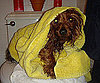Pet Pic of the Day: Mr. Beans After a Bath
