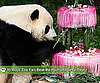 Ice For Zoo Animal Enrichment at Tai Shan&#039;s Fourth Birthday