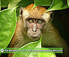 Go Bananas For 9 Animals Monkeying Around!