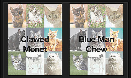 Play Which Cat Name Is Wackiest  . . . And Win!