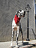 RIP, Gibson: World's Tallest Dog Loses His Cancer Battle