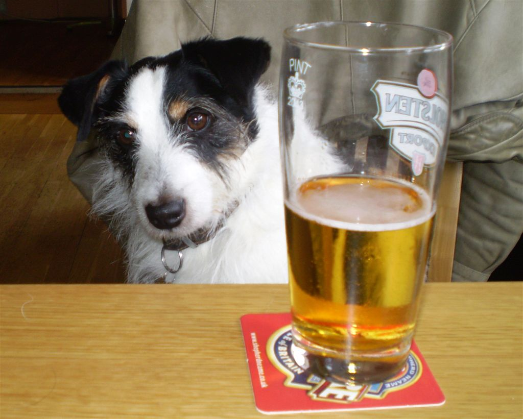 A Dog Walked Into a Bar . . .