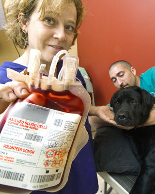 Doggie Blood Donors