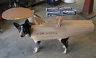 Doggie Wears USS Enterprise With Beer Can Boosters: In the LINK of an Eye!