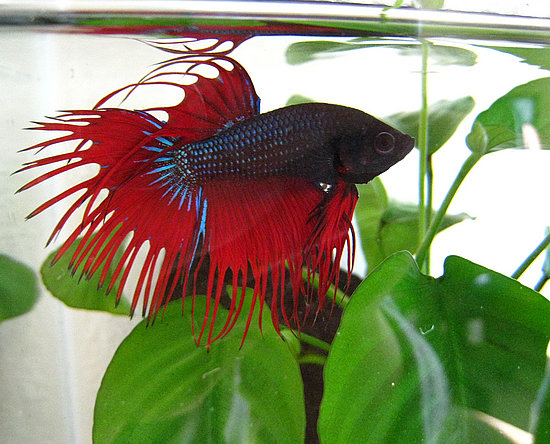 Popular Pet Fish Names