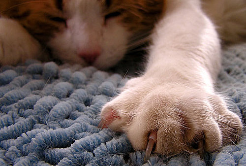What's Your Take: Legal Ban on Declawing?