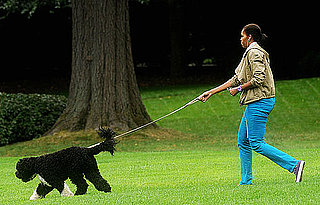 Michelle Obama Walking Bo