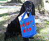 Pet Pic of the Day: Buddy Holly Carries His Own Weight